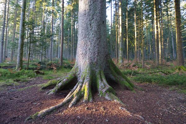 もみの内装材には、もみの木が放散するフィトンチッドによる調湿・消臭・断熱など驚きの効果があります。